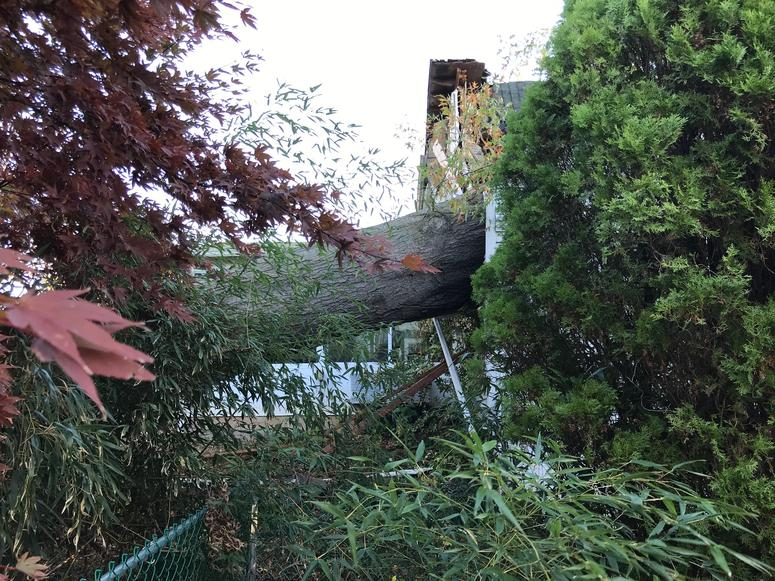 An 80-foot-tall tree slammed into this house, essentially knocking it off its foundation, in last week's storm.