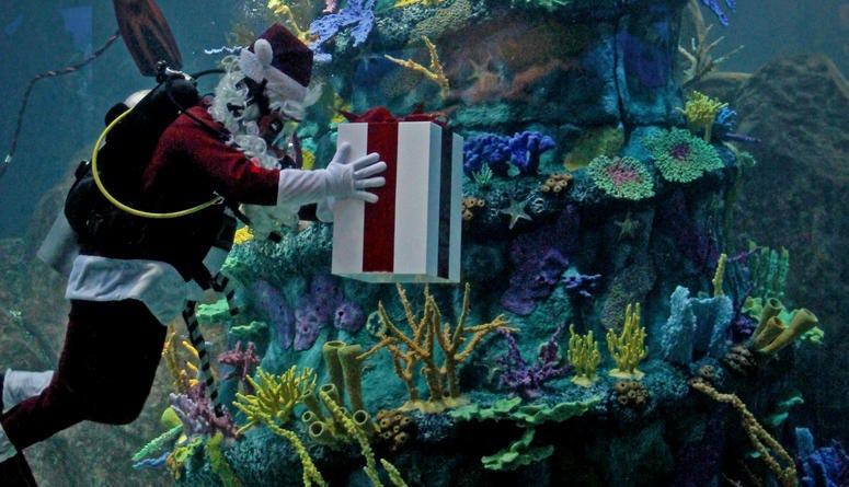 Christmas Underwater