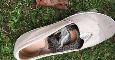 The python was taken into quarantine.