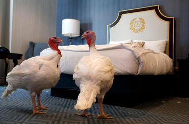 A door has a privacy request hanging on it outside the hotel room where two turkeys that will be pardoned by President Donald Trump are staying at the Willard InterContinental Hotel, Monday, Nov. 25, 2019, in Washington.