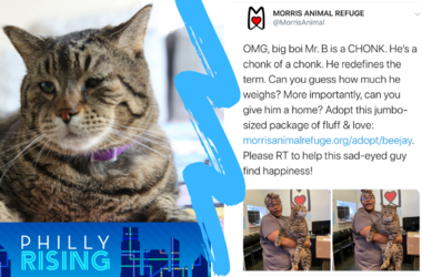 Back in August, the Morris Animal Refuge tweeted a picture of a 26-pound cat that broke the internet and stole tens of thousands of hearts.