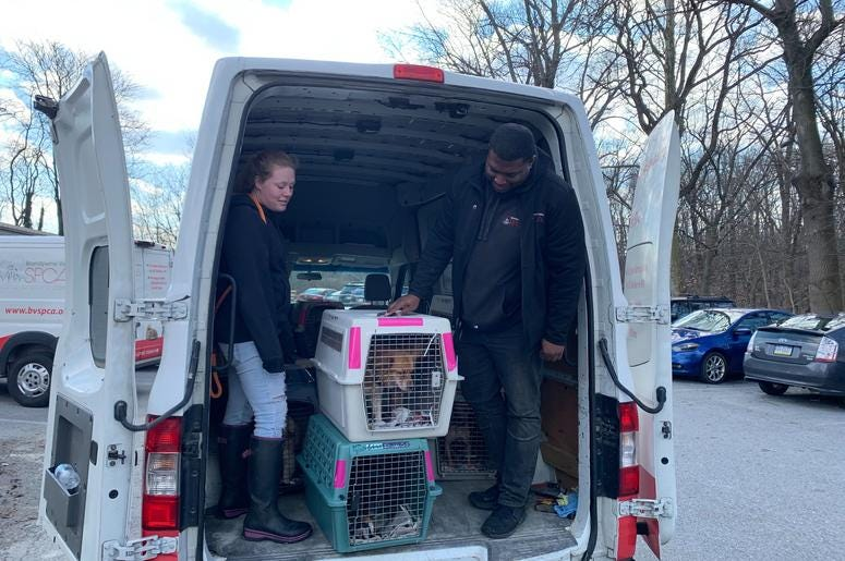 Local animal shelter helps dogs displaced by Puerto Rico earthquakes