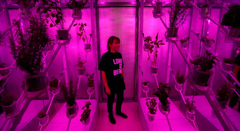 "A staff member poses for photographs inside the Netherlands installation ""Power Plant"", a futuristic greenhouse that uses sunlight to generate both food and electricity during a preview for the London Design Biennale at Somerset House."