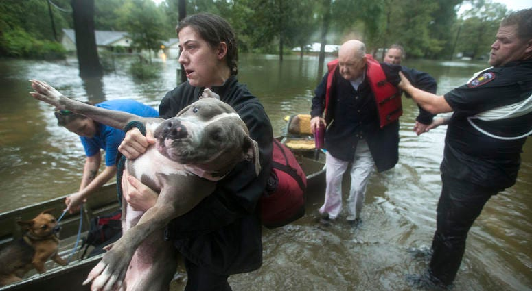 Jade McLain carries Thor out of a boat as she and Fred Stewart were rescued from their flooded neighborhood inundated by rains from Tropical Depression Imelda by Splendora Police officers on Thursday, Sept. 19, 2019, in Spendora, Texas.