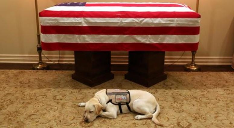 Bush's service dog will travel to funeral