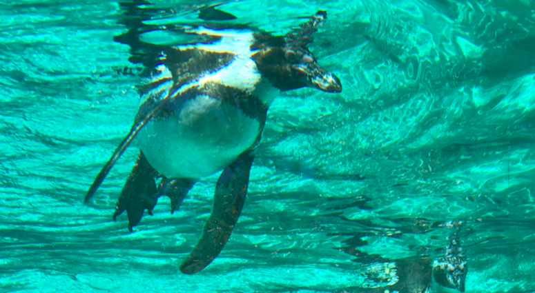 The new space, called Penguin Point, is the former home of the polar bear habitat.