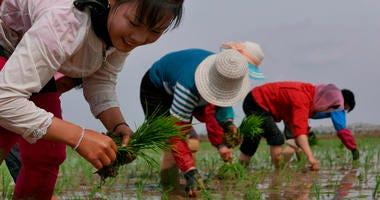 North Korean farmers