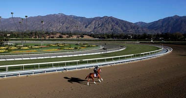 An exercise rider takes a horse for a workout at Santa Anita Park.