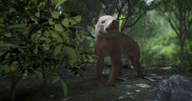 A rendering of the ancient Carsioptychus mammal taken from the PBS NOVA special, Rise of the Mammals.