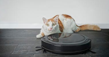 A tabby cat reacts to a robot vacuum cleaner.