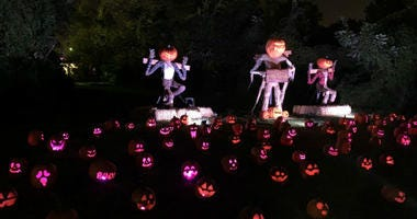 Jack-o'-lanterns on display in Fairmount Park.