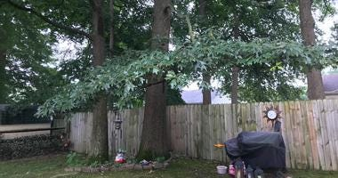 This tree, in a Newark, Delaware, neighborhood, was struck by lightning.