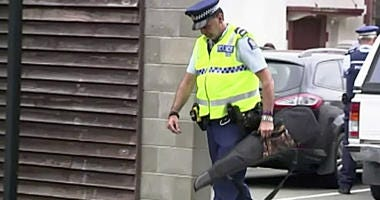 In this image made from video taken March 19, 2019, a police officer carries a gun voluntarily surrendered by a member of the public into the Masterton police station in Masterton, New Zealand.