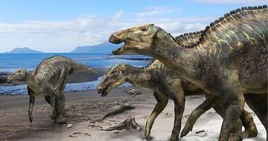 Researchers have found a nearly complete skeleton of a new dinosaur.