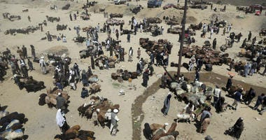 Afghan livestock merchants display animals for the upcoming Muslim Eid al-Adha holiday, in Kabul, Afghanistan, Monday, Aug. 20, 2018.