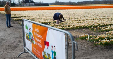 A tourist takes pictures as a new sign asking tourists to stay out of the flower bulb fields is seen in the foreground in Noordwijkerhout, near Lisse, Netherlands, Wednesday, March 27, 2019.