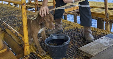 A dog is taken care by an oil rig crew after being rescued in the Gulf of Thailand.