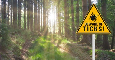 Yellow warning sign `beware of ticks` at a sunny clearing in the forest