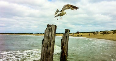 Seagull on post at New Jersey Shore