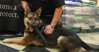 Philadelphia Customs and Border Protection narcotics detector dog Dasha.