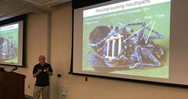 Spotted lanternfly presentation