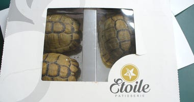 A 69-year-old man almost successfully smuggled a pastry box from Morocco, which was actually filled with live tortoises.