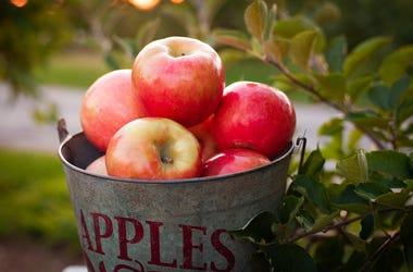 bucket o' apples