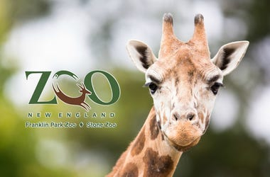 Franklin Park Zoo And Stone Zoo Ticket Giveaway