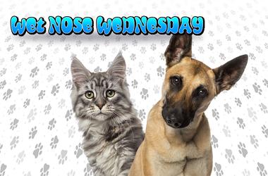 Wet Nose Wednesday - Majic 95.5 FM