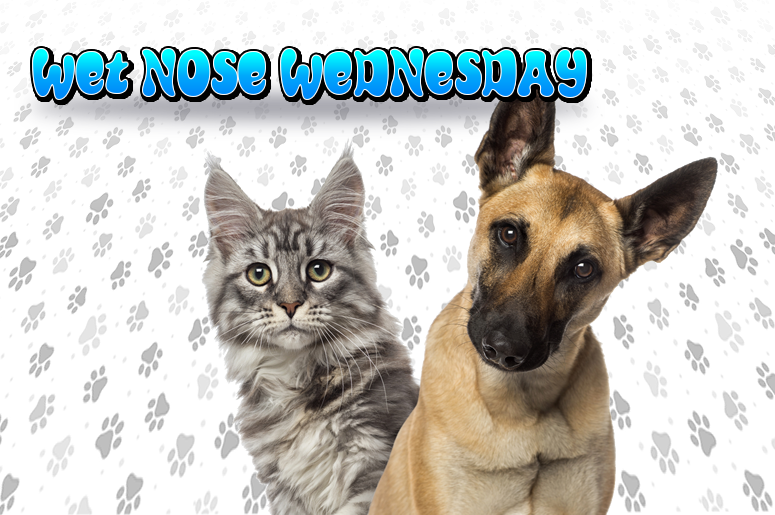 Wet Nose Wednesday - Majic 95.5 FM