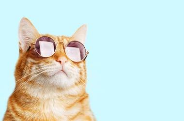 cool cat wearing sunglasses