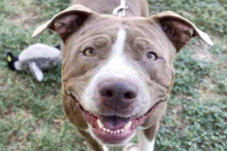 Ariel @ Austin Humane Society September 2020