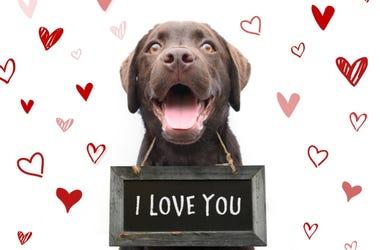 Valentines Day Dog