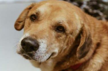 Finn @ Austin Humane Society June 2020