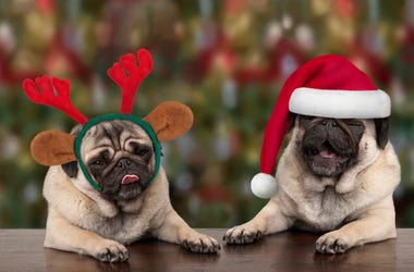 dog xmas pictures