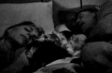 Heather honey Ted & Rudy sleeping