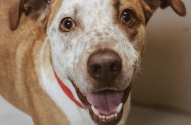 Johnny @ Austin Humane Society August  2020