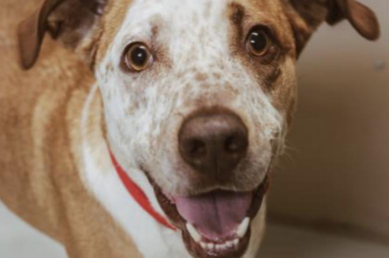 Johnny @ Austin Humane Society August  2020
