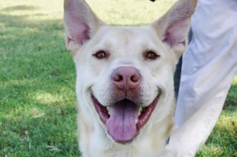 Lenny @ Austin Humane Society September 2020
