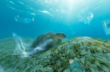 Ocean Plastics Turtle Getty Images Jag_cz