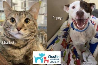 Popeye & Charlotte @ Austin Humane Society May 2020