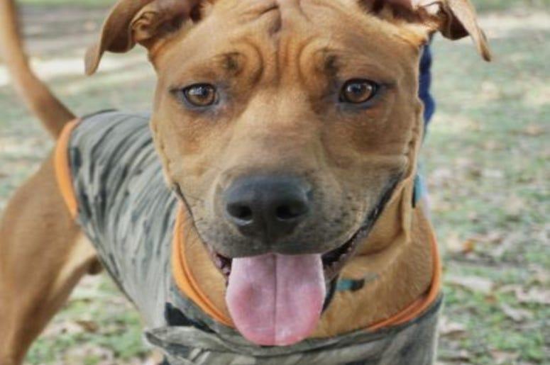 Scooby Doo Austin Humane Society November 2019