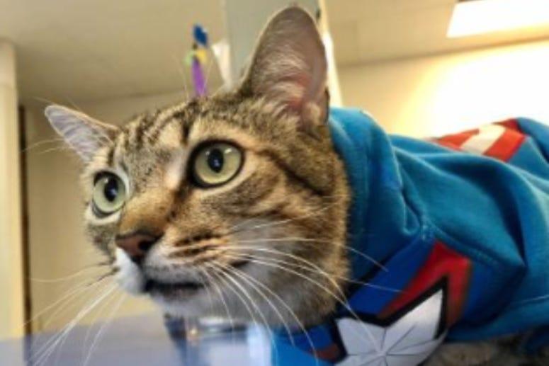 Captain America Austin Humane Society May 2020
