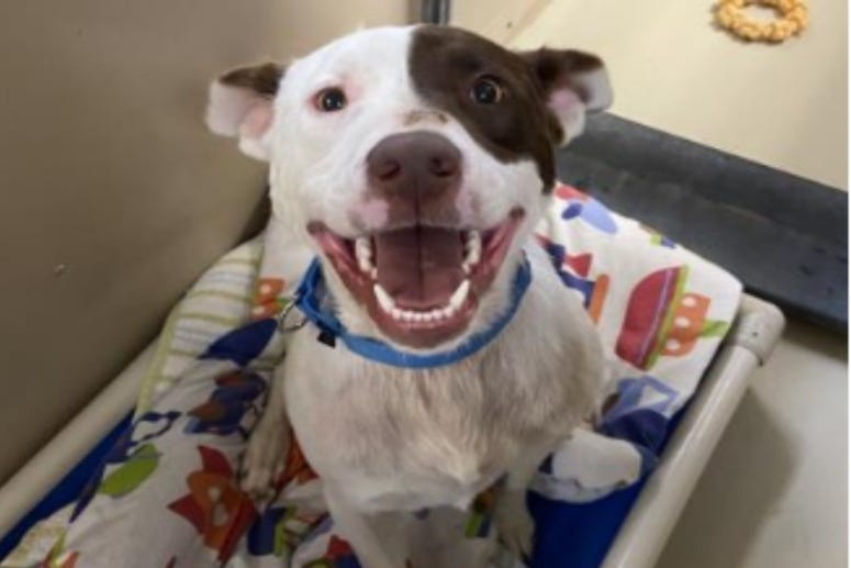 Popeye @ Austin Humane Society May 2020