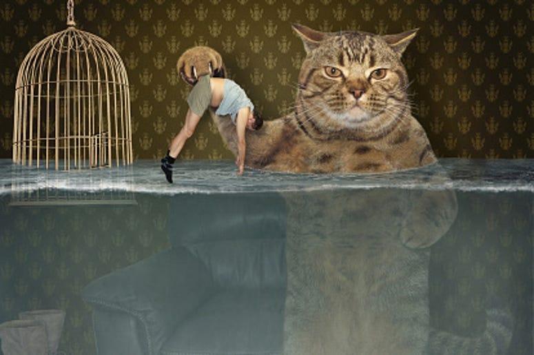 Cat rescues human