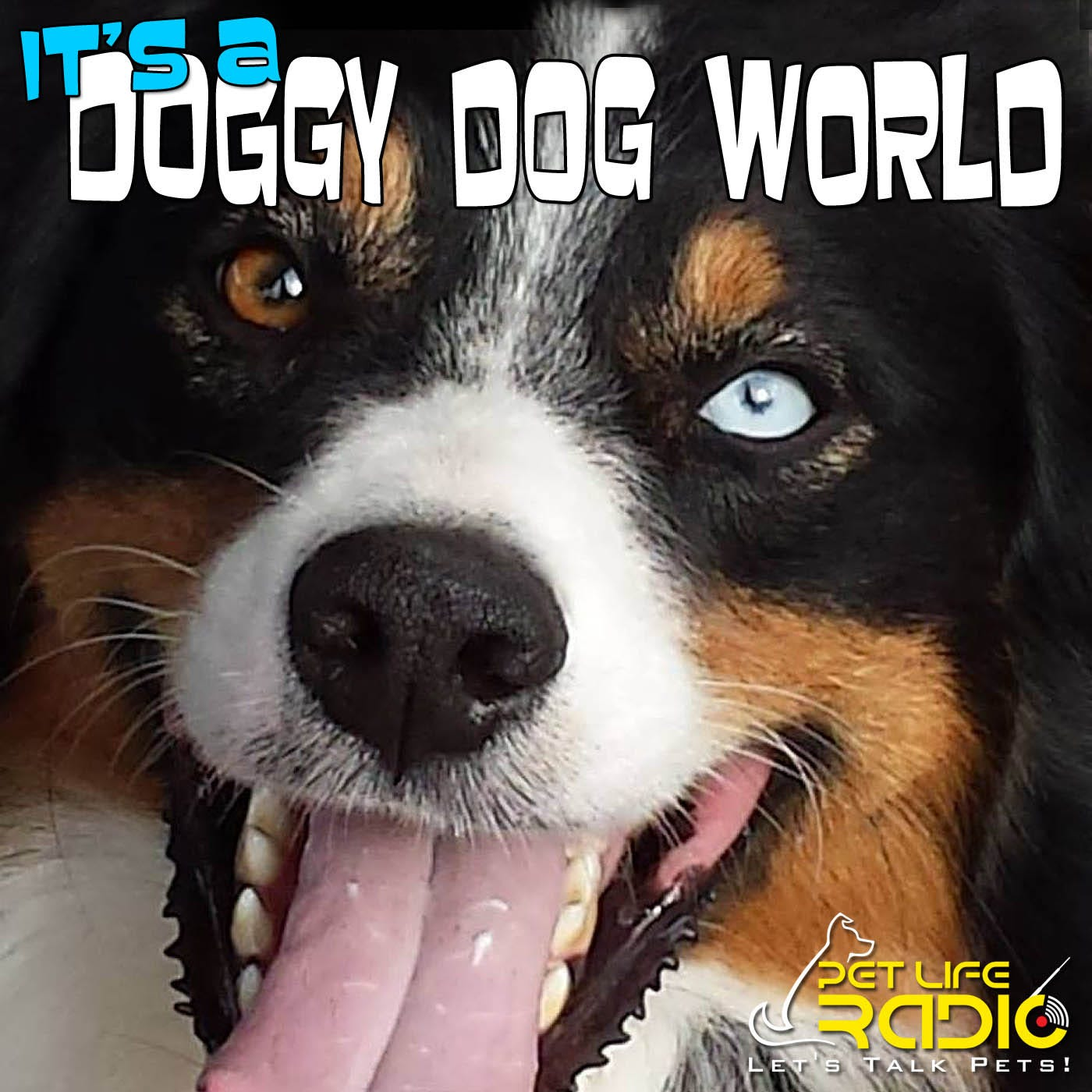 It's A Doggy Dog World - Dog Podcast about dogs as pets & caring for your pet dog, - Pets & Animals on Pet Life Radio (PetLifeRadio.com)