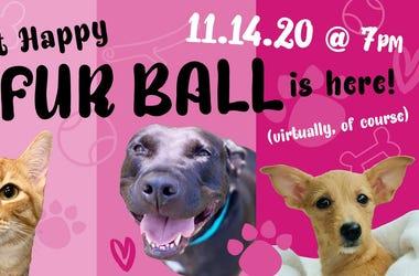 5th Annual Virtual Fur Ball Event