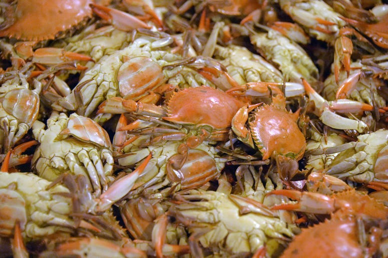 Steamed Maryland crabs are ready for picking at G.W. Hall & Son's fresh seafood on the Eastern Shore, on Thursday, May 3, 2018. The Hall brothers were chosen through a visa lottery to obtain temporary migrant help, but they are still concerned about the i