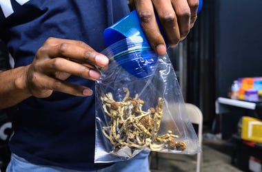 In this Friday, May 24, 2019 photo a vendor bags psilocybin mushrooms at a cannabis marketplace in Los Angeles. (AP Photo/Richard Vogel)
