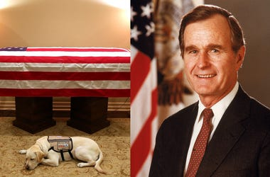 Sully and President George H.W. Bush